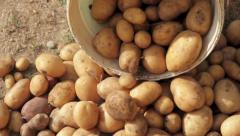 Downloading potatoes - stock footage
