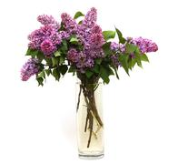 lilac bouquet - stock photo