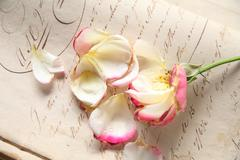 fading rose on vintage handwriting - stock photo