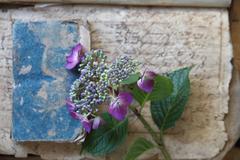 Damaged vintage books with hydrangea flowers Stock Photos