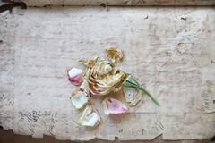Old document pages with faded rose Stock Photos