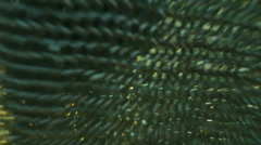 Chainmail chain mail 2 Stock Footage