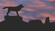 Wolf howling silhouette against pink clouds Stock Footage