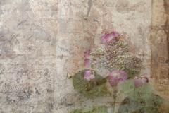 hydrangea grunge - stock photo