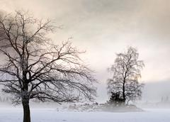 bare tree in foggy landscape - stock photo