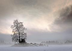 Bare tree in foggy landscape Stock Photos