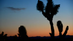 Joshua Tree Silhouette Zoom Out at Dusk Stock Footage