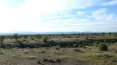 Joshua Tree Desert Landscape Pan Stock Footage