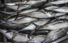 Fresh fish on ice on the market Stock Photos