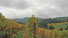 Vineyard with Grapes Bearing Vines with Autumn Fall Colors in Dundee Oregon - stock footage