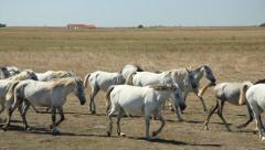 Horseman gathering their horses Stock Footage