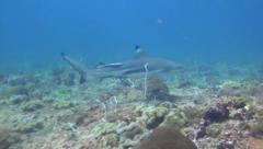 Black Tip Shark swimming away Stock Footage