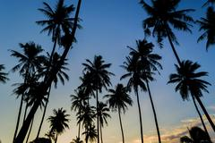 Coconut tree silhouette with sunset background Stock Photos