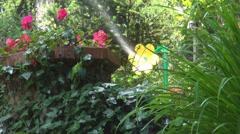 Sprinkler Watering Flowers in Eden Garden, Irrigation of Meadow, Irrigating Stock Footage