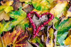 Love Autumn - stock photo