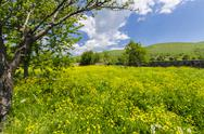 Stock Photo of allgaue meadow, dandelions, flowers and grass medow nature bloom background