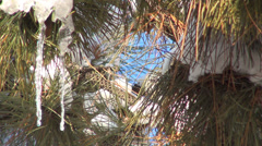 Snow, Winter Scene, Christmas Scene,  Icicles on Trees, Fir Branches, Background Stock Footage