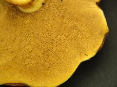 Close up of mushroom - stock photo
