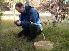Picking wild mushrooms 3 - stock photo