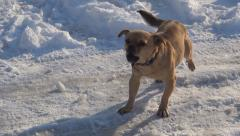 Barking Stray Dog in Winter, Abandoned Animal in Cold, Frost, Vagabond in Street Stock Footage