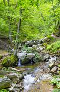 Fall forest stream of ecology clean environment, macedonia Stock Photos