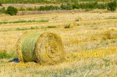 Stock Photo of round straw bales at harvested field