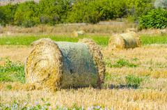 Harvested field with round straw bales in summer Stock Photos