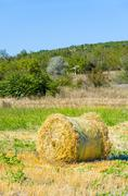 Harvested field with round straw bales in summer, vertical Stock Photos