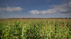 Overhead view of the large corn field Stock Footage