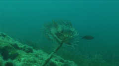 Underwater beauty  plant Stock Footage