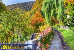 seasonal fall foliage - stock photo