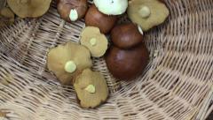 Basket and wild mushrooms Stock Footage