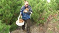 Stock Video Footage of Man and basket of wild mushrooms 4