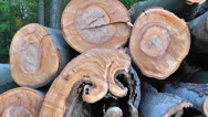Wood Pile Steady Cam Close-Up Stock Footage