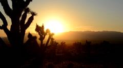 Joshua Tree Silhouette Sunset Time Lapse 2 Stock Footage