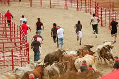 young men run ahead of stampeding bulls at georgia event - stock photo