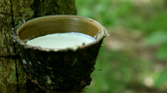Rubber Tree Latex Collection Cup Stock Footage