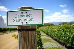 Stock Photo of sign for cabernet sauvignon grapes in vineyard