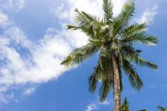 a palm tree on blue sky in thailand - stock photo
