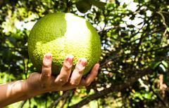 green pomelo fruit and hand - stock photo