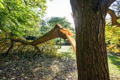 Tree damaged during uk storm Stock Photos