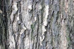 tree bark. detailed.texture effect. background - stock photo