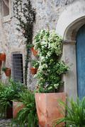 potted plants outside a dwelling - stock photo
