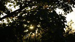 Dappled Sunset Stock Footage