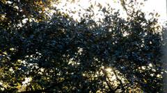 Dappled Sunlight Stock Footage