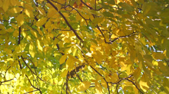 Autumn fall leaves Stock Footage