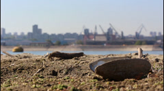 Banks of the river, cranes Stock Footage