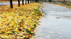Big puddle on autumnal alley with yellow foliage and cold Rain Stock Footage