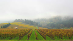 Dundee Oregon Vineyards on Rolling Hills with Morning Fog in Fall Time Lapse Stock Footage