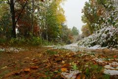 First snow fall - stock photo